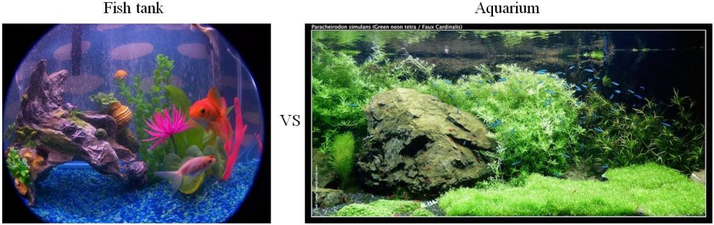 the difference between fish tank and aquarium