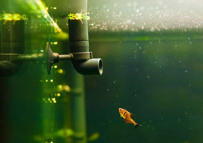 dirty-aquarium-water-because-of-no-maintainance-mechanical-bio-filter-media