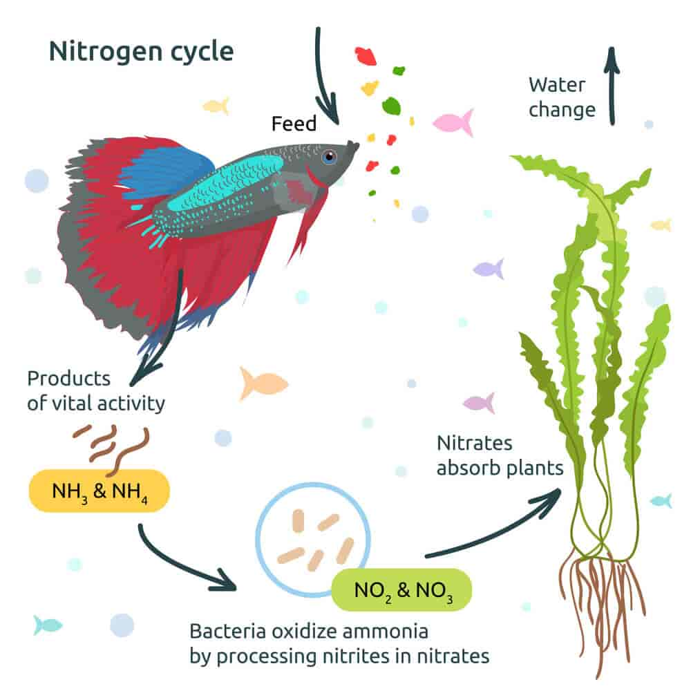 nitrogen-cycle-explanation