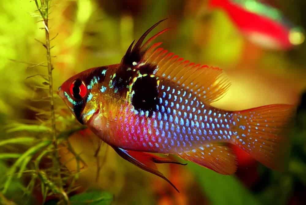 fish-in-suitable-aquarium-water-hardness