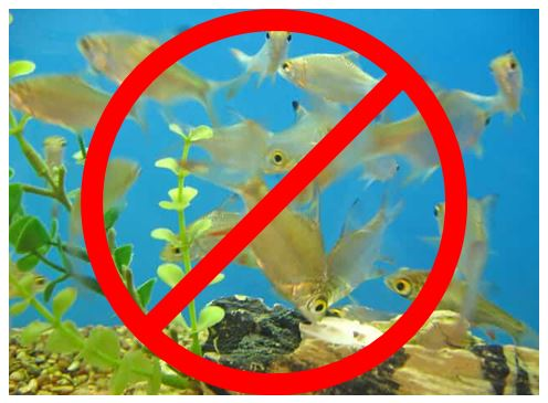 do-not-overstock-your-fish-tank