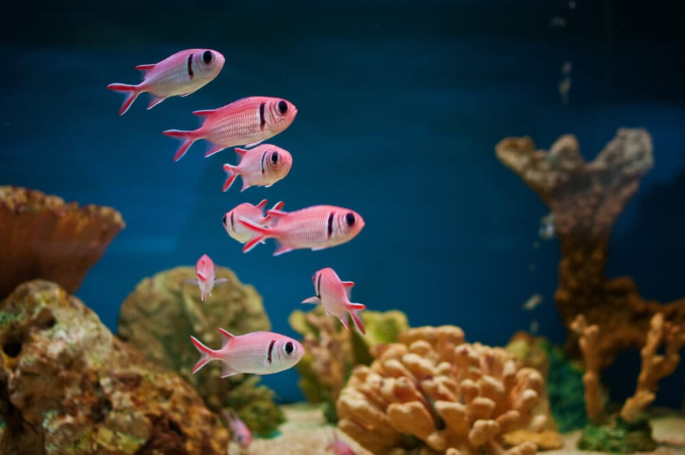Fish-healthy-with-effective-filtration