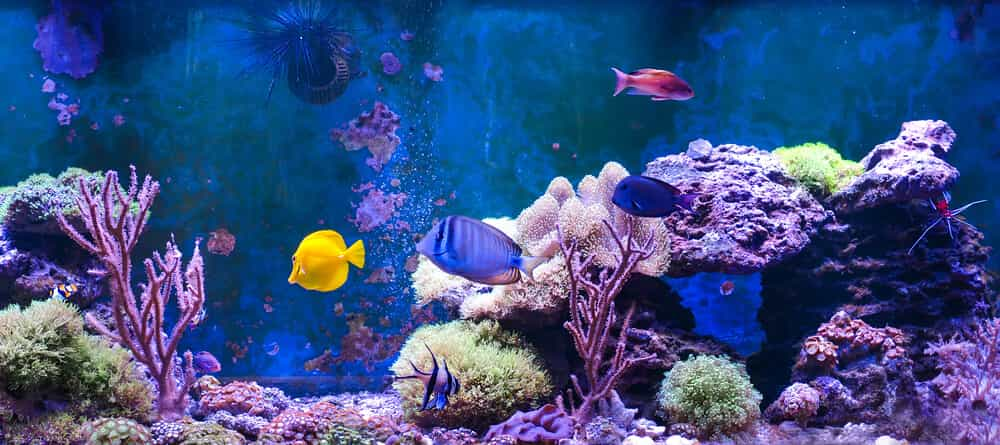 fish-swimming-in-saltwater-aquarium