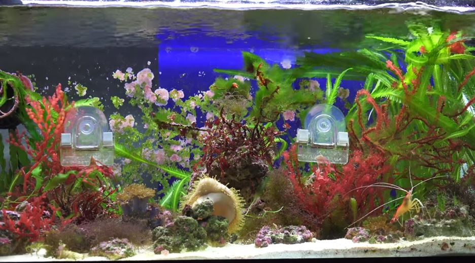 saltwater-aquarium-plants