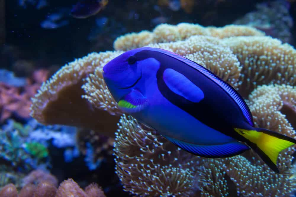 saltwater-fish-in-aquarium