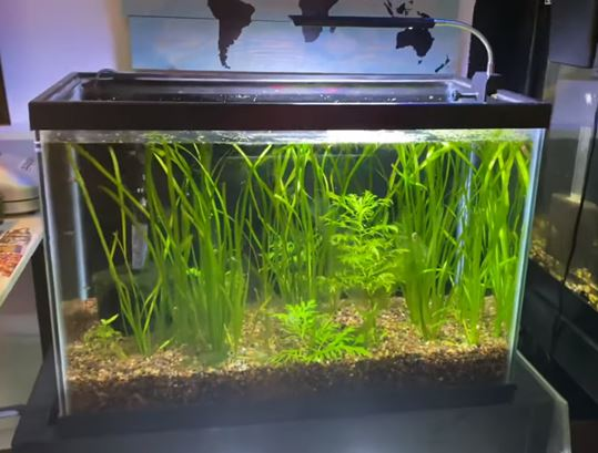 small-aquarium-with-a-clip-on-light