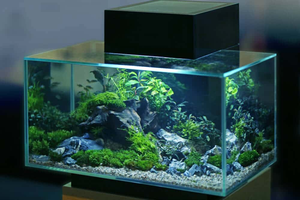 aquarium_lighting